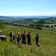 Sortie avec la SHNA au Puy de Pileyre 28 mai 2011